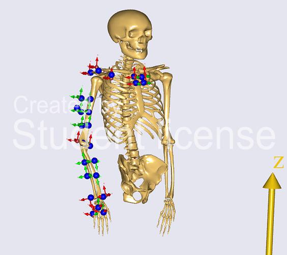 skelett_marker